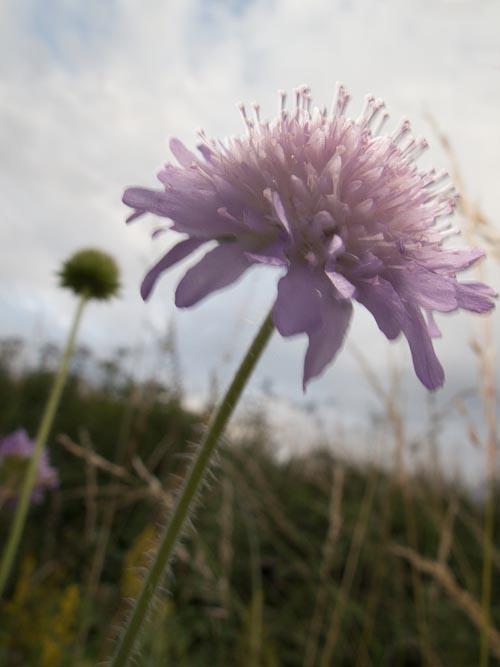 blof-flower.jpg
