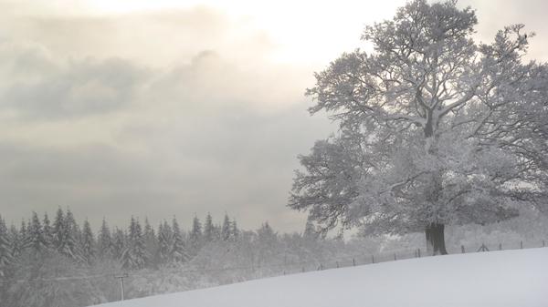 winter-blog.jpg